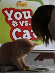Are you smarter than a house cat? Friskies goes digital to make your iPad more kitty-friendly
