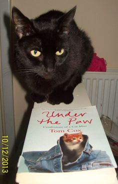 "A cat who resents being bought books about cats, such as my first cat book, ""just because it's a cat too""."