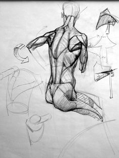 by KChens class demos Gross Anatomy, Human Anatomy, Body Anatomy, Anatomy Study, Anatomy Drawing, Sketching Techniques, Anatomy Tutorial, Anatomy Reference, Drawing Reference