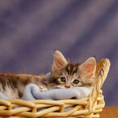 どうしてもカゴに入ってしまう猫たち【画像集】