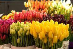 Imagem de flowers, tulips, and yellow