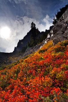 Autumn color covers the flanks of Central Oregon's Three Fingered Jack mountain.