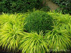 Ogród mały, ale pojemny;) - strona 79 - Forum ogrodnicze - Ogrodowisko