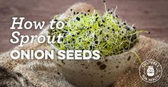 How To Sprout Onion Seeds