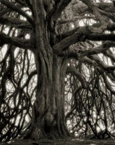 """San Francisco-based photographer Beth Moon spent the last 14 years documenting with her camera some of the largest, rarest, and oldest trees on Earth. Beth recently published a book titled """"Ancient Trees: Portraits of Time"""". Picture Tree, Tree Woman, Moon Photography, Photography Flowers, Old Trees, World Pictures, Tree Forest, Tree Tree, Tree Bark"""