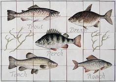 pan09_freshwater-fish.jpg (1280×914)