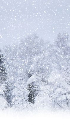 Heavy Snow Forest Landscape