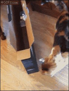 Unsuspecting Cats Get Completely Startled By ... Cucumbers