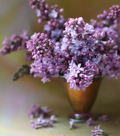 the lilacs...
