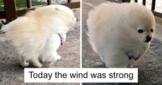 60+ Hilarious Dog Snapchats That Are Impawsible Not To Laugh At (Part 4)