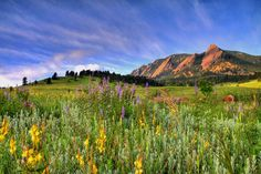 Colorado Photograph - Colorado Wildflowers by Scott Mahon #photo #coloroado #wildflowers #art