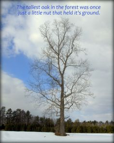 The tallest Oak was once a small nut that held its ground   http://www.kindovermatter.com/2014/03/the-tallest-oak.html