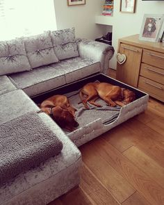 Dog beds can be simple or fancy, expensive or homemade, and everything in between. How do you pick the right dog bed for your pup when there are so many on the market? Does your pooch even need a dog bed? Here's a guide to answer your questions! Dog Rooms, My New Room, Interior Design Living Room, Interior Livingroom, My Dream Home, Home Goods, Bedroom Decor, Dog Bedroom, Bedroom Ideas