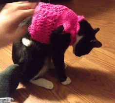 Выбери котенка в свитере: