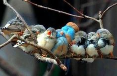 cute birdies :)
