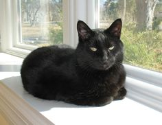 "From Laura... ""Simon in the sunshine""   For the month of October, Cat Faeries is celebrating black cats. We will post pictures of our customer's cuties and donate 1% of our October sales to several black cat rescue groups. You can find out more at www.catfaeries.com/blog/celebrating-black-cats-in-october/"