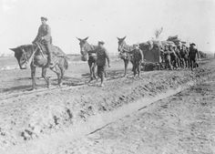 British troops taking up supplies on a mule drawn light railway. Balkan Front, January, 1917.