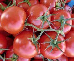 tomato-epsom-salt