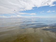 Report: Don't count on geothermal to save Salton Sea Salton Sea, Geothermal Energy, Beach, Water, Outdoor, Gripe Water, Outdoors, The Beach, Beaches