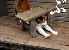 Portraits of Tokyo's Stray Cats by Masayuki Oki   Spoon & Tamago