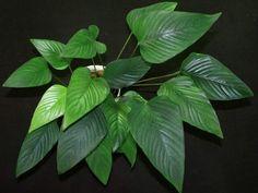 Anubias gracilis is de mooiste soort van de Anubias famillie. Een speer achtig blad dat echt een pronkstuk in je aquarium zal zijn. Groeit langzaam en heeft weinig belichting nodig