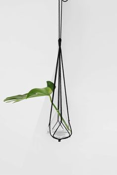 A nice plant hanger diy has been on my mind for a while. I am loving the…