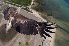 15outstanding photos from abird's-eye view