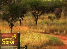 Holidays in Tanzania | Elephants at Soroi | Mbali Mbali Lodges and Camps