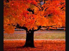▶ Vivaldi Four Seasons Vivaldi - YouTube