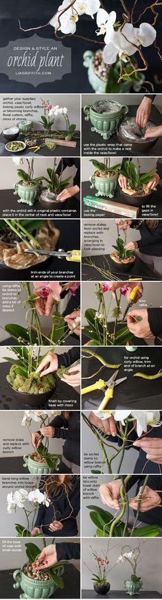 Use this easy step-by-step tutorial to style a grocery store orchid into a floral shop design. Use this easy step-by-step tutorial to style an affordable grocery store orchid plant into a floral shop design by handcrafted lifestyle expert Lia Griffith Indoor Garden, Garden Plants, Indoor Plants, House Plants, Outdoor Gardens, Potted Plants, Ikebana, Container Gardening, Gardening Tips
