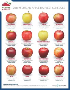 2016 Michigan apple harvest schedule