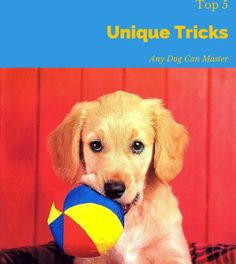 Top 5 Dog Tricks Any Dog Can Master http://www.longlivedog.com/5-tricks-any-dog-can-master/ #dogtips