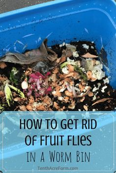 Composting Hacks Sometimes things go wrong in a worm bin and fruit flies develop. Learn how to…: - Sometimes things go wrong in a worm bin and fruit flies develop. Learn how to get rid of them quickly, and how to avoid getting them again in the future. Compost Soil, Garden Compost, Worm Composting, Garden Pests, Compost Tea, Organic Gardening, Gardening Tips, Urban Gardening, Indoor Gardening