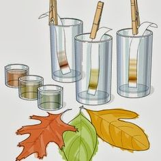 Chromatography of fall leaves.  Show photosynthesis and separation