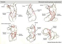 Dynamic torsos, female by ArsonAnthemKJ