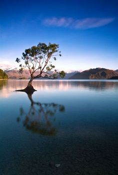 An early, post-sunrise shot of Lake Wanaka, Queenstown, New Zealand. This tree is growing in the lake and casts a reflection on the still, clear waters.