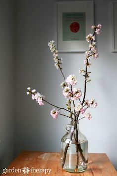 How to Force Flowering Branches to Bloom Indoors