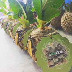 How do I care for my mini palm or mini fig kokedama? – Arozona | Help, Tips & Advice