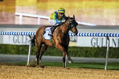 Rich Tapestry (IRE) 2008 B.h. (Holy Roman Emperor (IRE)-Genuine Charm (IRE) by Sadler's Wells (USA) 1st Al Shindagha Sprint (UAE-G3,1200mD,Meydan)