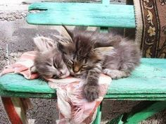 Bless these little beauties. They are soooo cute.