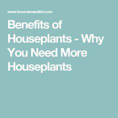 Benefits of Houseplants - Why You Need More Houseplants