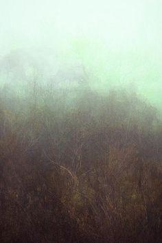 Misty cross section by .blue.algae./Rachel Haynes.
