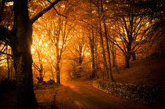 Autumn park walking / 4288 x 2848 / Forest / Photography . Autumn Nature, Autumn Forest, Autumn Cozy, Nature Tree, Forest Light, Magic Forest, Italy Landscape, Autumn Lights, Autumn Park