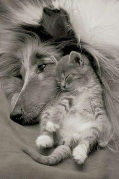 Awe... :) these two animal's love each other that true love