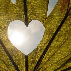 Nature Valentine's Day Card | @FairMail - Fair Trade Cards | Heart, Leaf, Sun Valentine Day Cards, Fair Trade, Nature, Sun, Celestial, Heart, Outdoor, Valentine Ecards, Outdoors