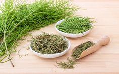 Alternative medicine for Endometriosis Primrose Oil, Evening Primrose, Herbal Remedies, Natural Remedies, Smooth Muscle Tissue, Chinese Plants, Endometriosis Pain, Rice, Diet