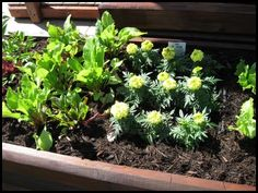 Lists how many of each kind of veggies to plant in each square of a square foot garden.