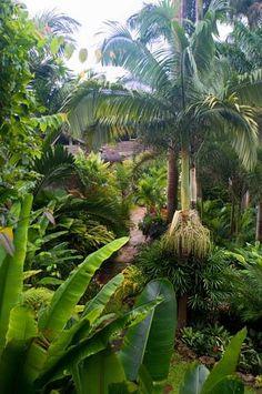 Hunte's Gardens - Barbados, Caribbean Islands