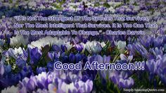 Good Afternoon #good