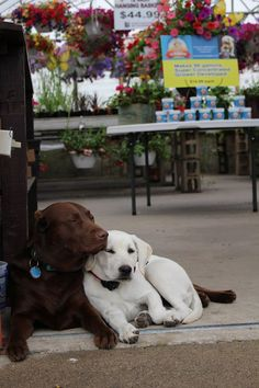 Bailey & Zoey all cuddled up by the greenhouse.